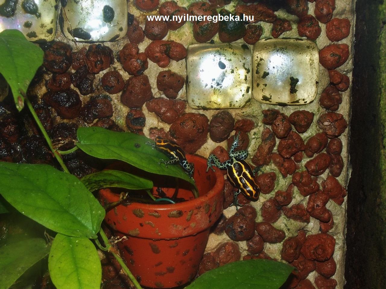 amazonicaiquitos