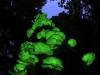 világító gomba a vadonban