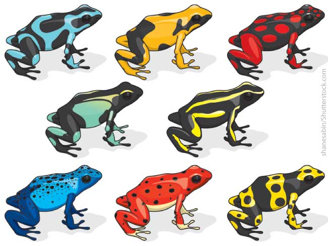 Poison-Dart-Frog-Color-Variation
