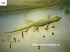 Lygodactylus conraui