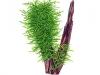 Tropica Taxiphyllum sp. Spiky moha