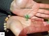 Dendorbates auratus microspot